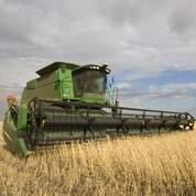 Le Maghreb multiplie les achats de céréales