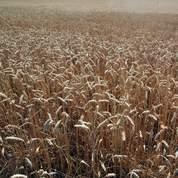Le climat menacerait l'agriculture
