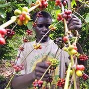Côte d'Ivoire : l'export de cacao et café bloqué