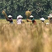 Controverse sur les prix agricoles