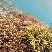 Les récifs coralliens menacés