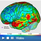 Le cerveau a rétréci depuis Cro-Magnon