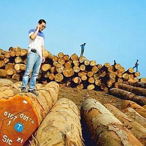 A Pointe-Noire, Philippe Yé inspecte une cargaison de bois destinée à la Chine. (Paolo Woods)
