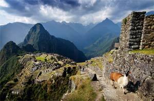 Toute la mystérieuse beauté du Machu Picchu se révèle aux lève-tôt, quand on n'y croise que des lamas solitaires. (Éric Martin/Le Figaro Magazine)
