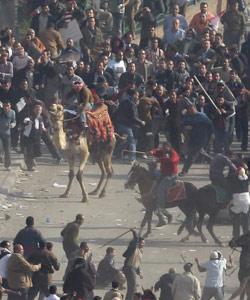 Des partisans de Moubarak chargent à dos de chameau et de cheval dans le centre du Caire mercredi. Crédits photo: AP