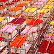 St Valentin : la Bourse des fleurs s'agite