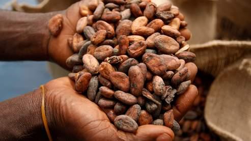 Le cacao au plus haut depuis 32 ans