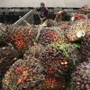 Huile de palme: bientôt une usine en France