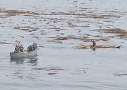 Un homme de 60 ans, Hiromitsu Shinkawa, a été secouru dimanche à 15km des côtes par la marine japonaise, après avoir flotté pendant deux jours, accroché à un morceau du toit de sa maison emportée par le mur d'eau.