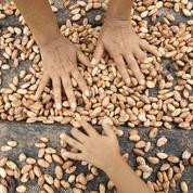 L'industrie s'adapte à la volatilité du cacao