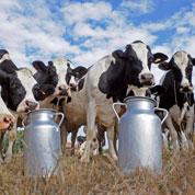 Menaces sur l'avenir de la production du lait