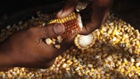 Records historiques pour l'or et le maïs