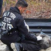 Long Island : nouvelles découvertes macabres