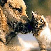 La santé animale reste résistante à la crise