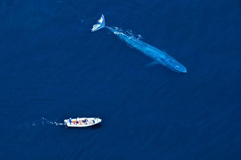 """( صورة و منظر) : """"جمال أزرق من خليج المكسيك"""" 20110426PHOWWW00462"""