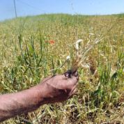 L'agriculture impactée par la sécheresse