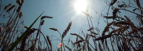 Sécheresse : des agriculteurs s'opposent aux restrictions