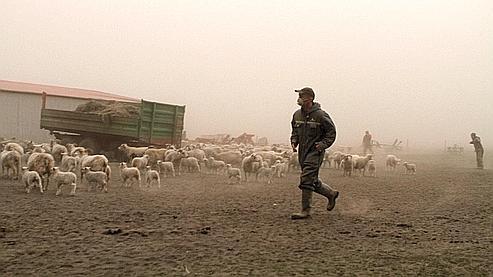 Un fermier islandais fait rentrer son troupeau pour le protéger des cendres volcaniques.