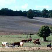 Le gouvernement encourage le biogaz