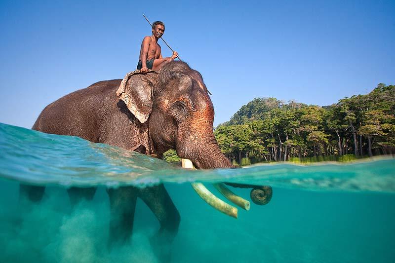 <b>Duo</b>. Cet homme nage dans le bonheur. Les îles Andaman, dans l'archipel situé dans le Golfe du Bengale, est le seul endroit au monde où l'on peut voir des éléphants traverser la mer à la nage. Il parvient même à nager la tête sous l'eau, se servant alors de sa trompe en guise de tuba. Moment unique et magique !