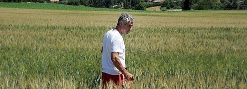 Sécheresse : les agriculteurs ne peuvent plus s'assurer