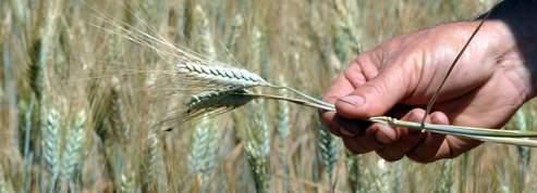 Sécheresse : les agriculteurs seront indemnisés