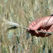 Sécheresse : les agriculteurs indemnisés