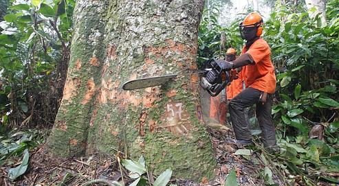 Vente illégale des bois tropicaux:l'étau se resserre
