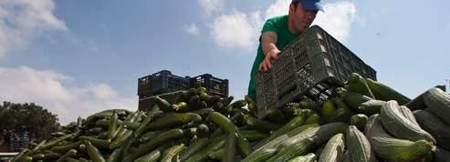 Bactérie : l'UE versera plus de 150 millions aux agriculteurs
