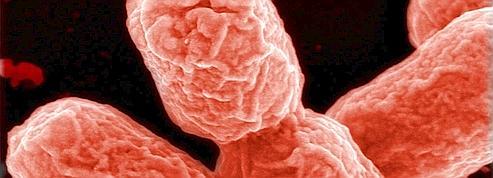 L'Allemagne admet des erreurssur la bactérie