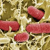 L'émergence des superbactéries