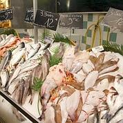 Grossesse : du poisson contre la prématurité