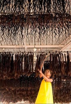 Les cheveux de qualité sont suspendus pour sécher; les cheveux en vrac, eux, sont étendus sur des terrasses pendant 30 minutes. (Raphaël Gaillarde)