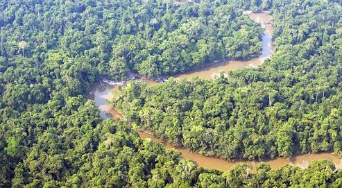 La forêt amazonienne.