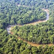 Forêts : indispensables pour absorber le CO2