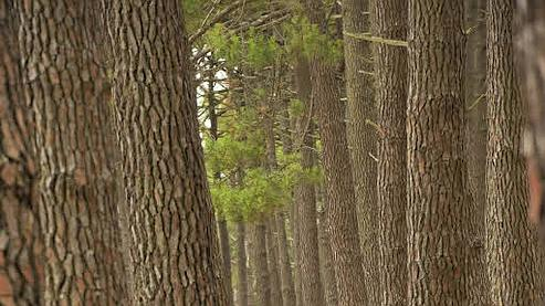 Des organisations à but non lucratif se chargent en effet de planter des arbres pour votre compte, en divers endroits de la planète. (Crédits photo: LE FIGARO)