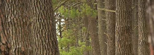 Adoptez un arbre<br/>