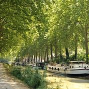 Les platanes sacrifiés du canal du Midi