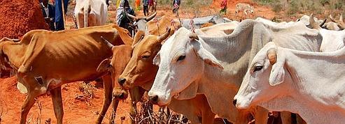 «En Éthiopie, même les chameaux meurent de soif»