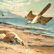 L'archéoptéryx n'est plus le premier oiseau