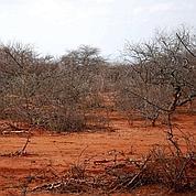 Pourquoi y-a-t-il une sécheresse en Afrique ?