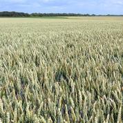 La hausse constante du prix des terres agricoles