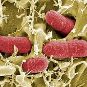 Le combat contre les superbactéries