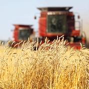 Les Canadiens misent aussi sur le «sans-OGM»