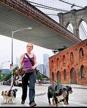 Suzanne Kranoch s'occupe de 22 à 25 chiens, qu'elle sort régulièrement.