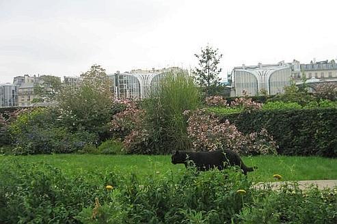 De nombreux chats avaient pris l'habitude de sillonner l'ancien jardin des Halles. Crédits photo : Chadhal.