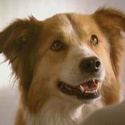 Nestlé invente la pub pour les chiens