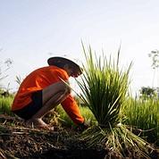 L'ONU s'alarme des prix agricoles élevés