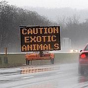 USA : des animaux s'échappent d'un «zoo»