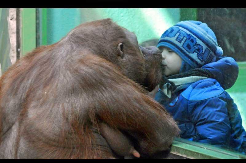 """""""براءة الأطفال الحيوانات """" 20111107PHOWWW00500."""